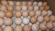 Яйца инкубационные Венгрия Польша Чехия (маркированные) КООБ 500  другие породы,   курица