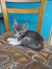 Котенок Кузя ищет домик