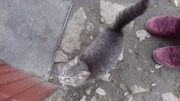 Продам котёнка за 5 лей