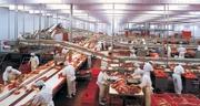 Румыния. Работа на Европейском заводе.